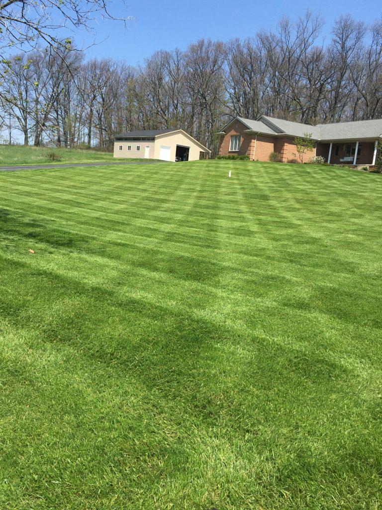fresh cut grass
