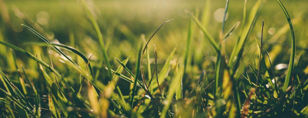 openfield grass